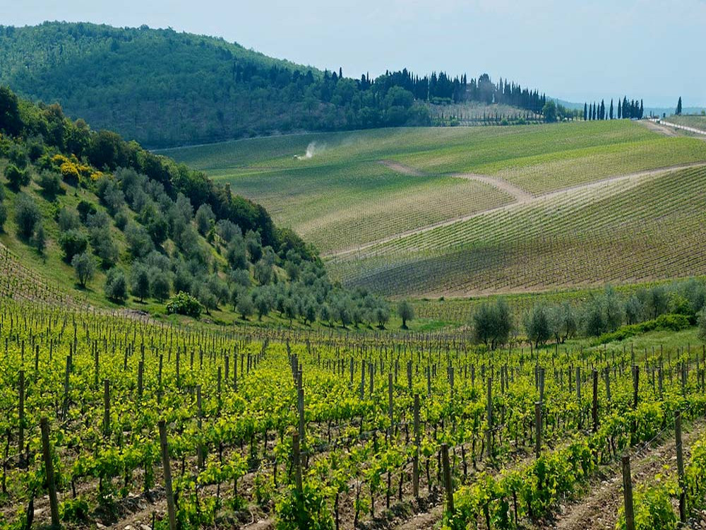 Chianti Tour and Wineries